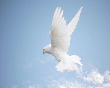 Libertad de religión