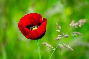 flor cautivas mujer