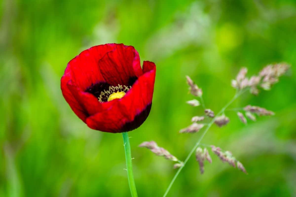 flor cautiva mujer