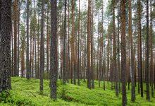 humano bosque