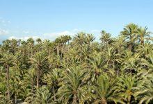 Erudito del palmeral