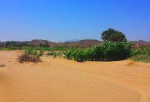 Desierto Arabia